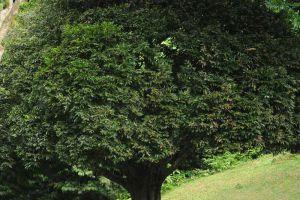 Botanic-Gardens-Penang-Malaysia-003.jpg
