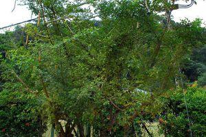 Botanic-Gardens-Penang-Malaysia-004.jpg