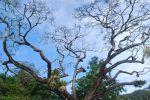 Botanic-Gardens-Penang-Malaysia-005.jpg