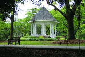 Botanic-Gardens-Singapore-003.jpg