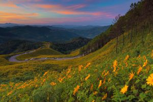 Bua-Tong-Fields-Doi-Mae-U-Kho-Mae-Hong-Son-Thailand-001.jpg