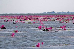 Bung-Boraphet-Nakhon-Sawan-Thailand-001.jpg