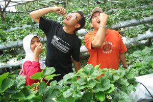 CS-Travel-Tours-Cameron-Highlands-Malaysia-005.jpg