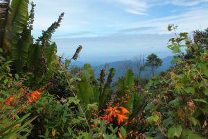 CS-Travel-Tours-Cameron-Highlands-Malaysia-006.jpg