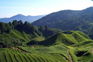 Cameron-Highlands-Pahang-Malaysia-001.jpg