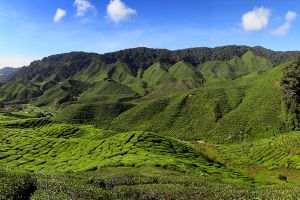 Cameron-Highlands-Pahang-Malaysia-002.jpg