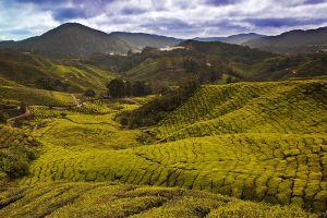 Cameron-Highlands-Pahang-Malaysia-004.jpg
