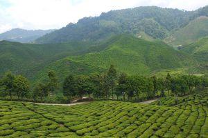 Cameron-Highlands-Pahang-Malaysia-005.jpg