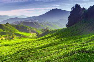 Cameron-Highlands-Pahang-Malaysia-006.jpg