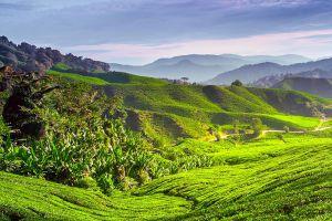 Cameron-Highlands-Pahang-Malaysia-007.jpg