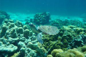 Castaway-Divers-Koh-Lipe-Satun-Thailand-002.jpg