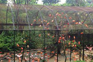 Chainat-Bird-Park-Thailand-003.jpg