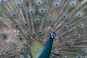 Chainat-Bird-Park-Thailand-005.jpg