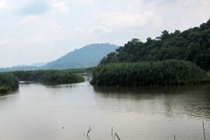Chini-Lake-Pahang-Malaysia-002.jpg