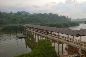 Chini-Lake-Pahang-Malaysia-003.jpg