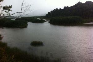 Chini-Lake-Pahang-Malaysia-006.jpg