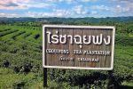 Choui-Fong-Tea-Plantation-Chiang-Rai-Thailand-01.jpg