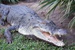 Crocodile-Park-Davao-Philippines-002.jpg