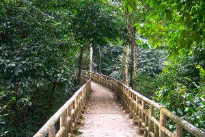 Cuc-Phuong-National-Park-Ninh-Binh-Vietnam-002.jpg