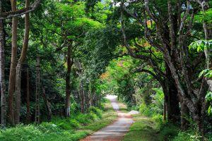 Cuc-Phuong-National-Park-Ninh-Binh-Vietnam-003.jpg