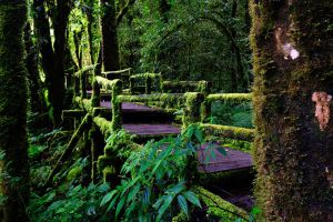 Doi-Inthanon-National-Park-Chiang-Mai-Thailand-002.jpg
