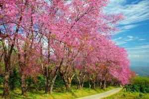 Doi-Khun-Mae-Ya-Mae-Hong-Son-Thailand-05.jpg