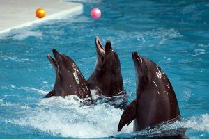 Dolphinarium-Pattaya-Chonburi-Thailand-01.jpg