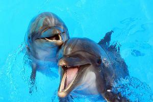 Dolphinarium-Pattaya-Chonburi-Thailand-02.jpg