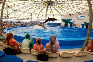 Dolphinarium-Pattaya-Chonburi-Thailand-04.jpg