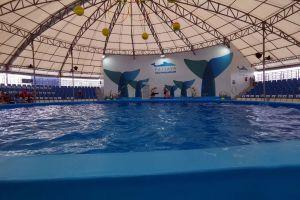 Dolphinarium-Pattaya-Chonburi-Thailand-05.jpg