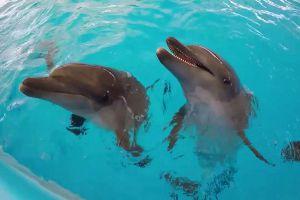 Dolphinarium-Pattaya-Chonburi-Thailand-06.jpg