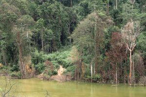 Dong-Ampham-National-Biodiversity-Conservation-Area-Attapeu-Laos-003.jpg