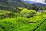 Ecocameron-Travel-Tours-Cameron-Highlands-Malaysia-002.jpg