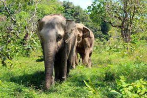 Elephant-Sanctuary-Phuket-Thailand-07.jpg