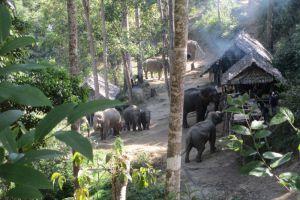 Elephant-Special-Tours-Chiang-Mai-Thailand-001.jpg