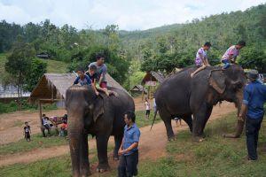 Elephant-Special-Tours-Chiang-Mai-Thailand-003.jpg