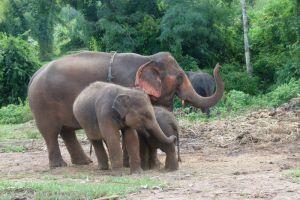 Elephant-Special-Tours-Chiang-Mai-Thailand-004.jpg