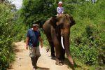 Elephant-Special-Tours-Chiang-Mai-Thailand-005.jpg