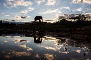 Elephant-Village-Surin-Thailand-001.jpg