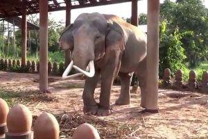 Elephant-Village-Surin-Thailand-002.jpg