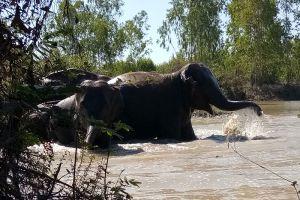 Elephant-Village-Surin-Thailand-003.jpg