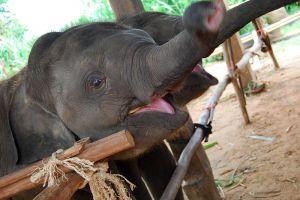 Elephant-Village-Surin-Thailand-004.jpg