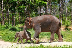 Elephant-Village-Surin-Thailand-005.jpg
