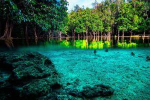 Emerald-Pool-Krabi-Thailand-004.jpg