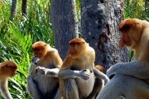 Exotic-Borneo-Wildlife-Tour.jpg