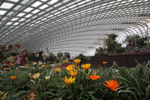 Flower-Dome-Singapore-003.jpg