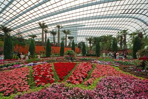 Flower-Dome-Singapore-005.jpg