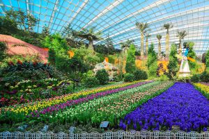 Flower-Dome-Singapore-006.jpg
