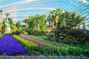 Flower-Dome-Singapore-008.jpg