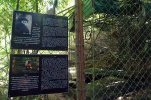 Gibbon-Rehabilitation-Project-Phuket-Thailand-02.jpg